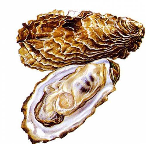Oysters are available seasonally
